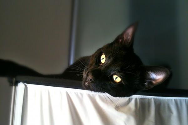 cat_portrait2